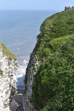 A spectacular view can be had from each of the viewing platforms at Bempton.