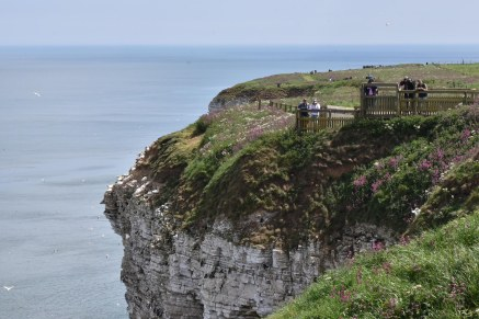 A view looking South over part of Bempton Cliffs.